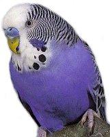 Bird Rescue & Boarding   Parrot Rescue & Boarding   Essex